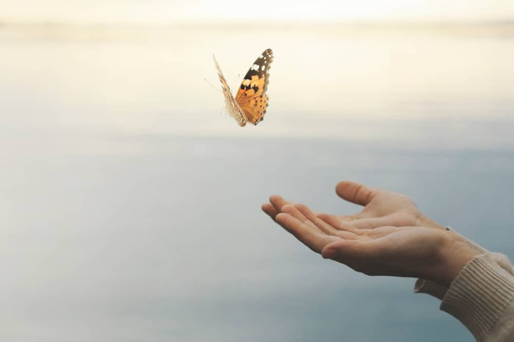 someone's hand releasing a monarch butterfly